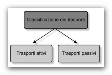 Classificazione dei trasporti di membrana