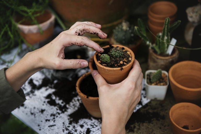Travaso pianta
