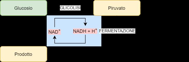 Fermentazione e recupero del NAD