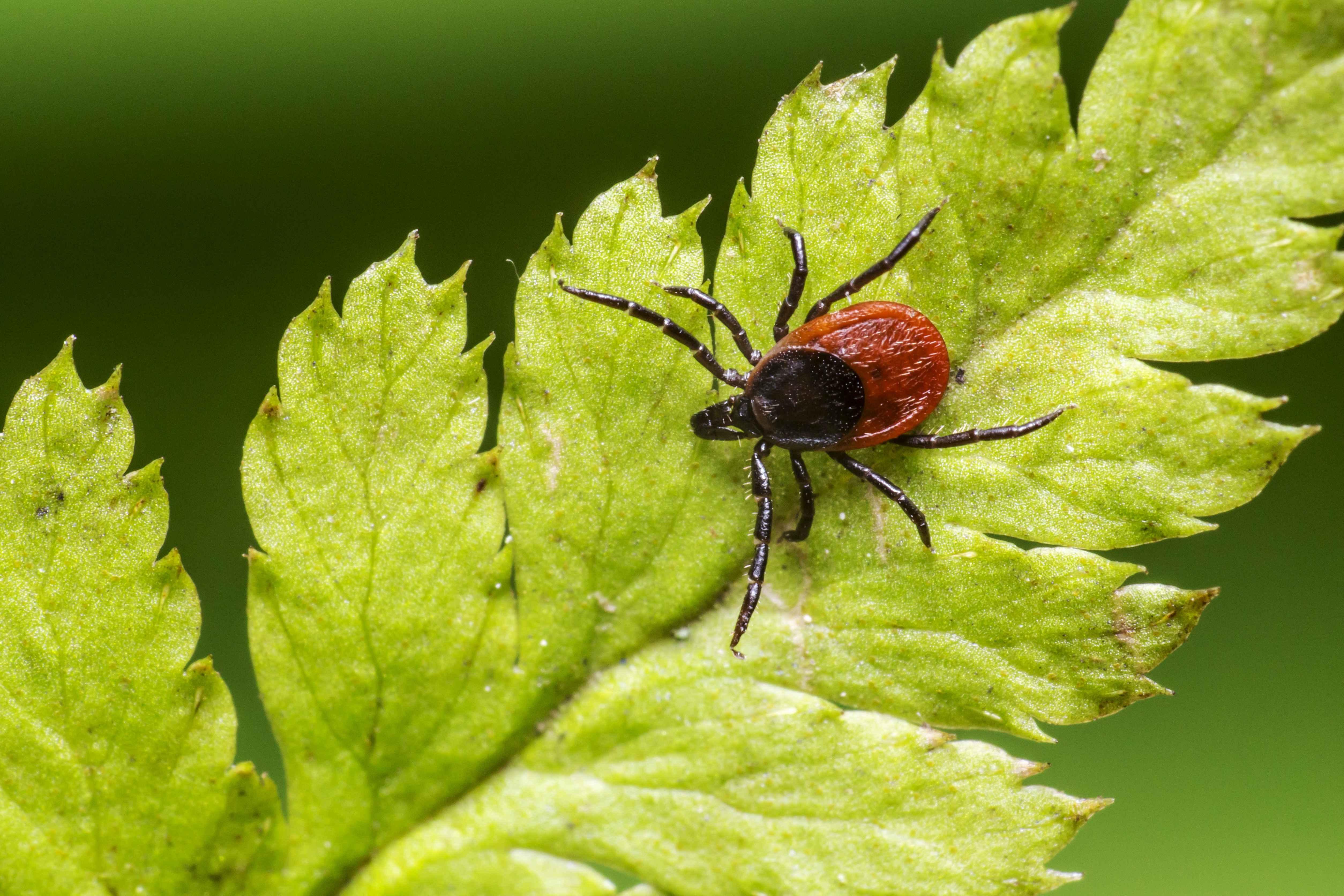 Malattia di Lyme /