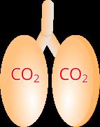 Polmoni CO2 e anidride carbonica