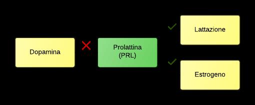 Regolazione della prolattina