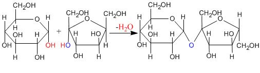 Biosintesi del saccarosio