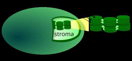 Presenza dei tilacoidi all'interno del cloroplasto