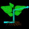 Icona fisiologia-vegetale
